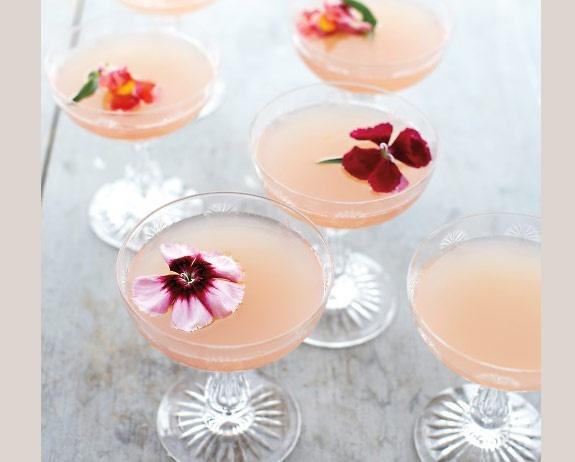 bebida (6)